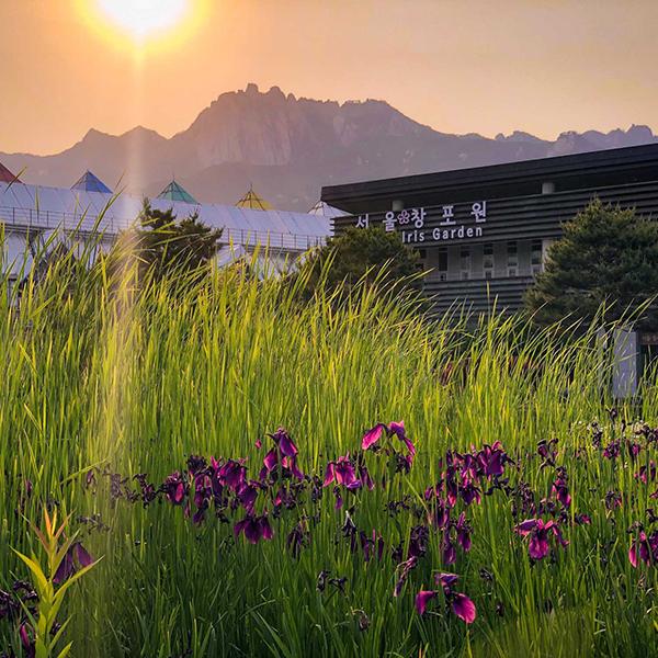 서울 북부의 숨겨진 명소, 창포원