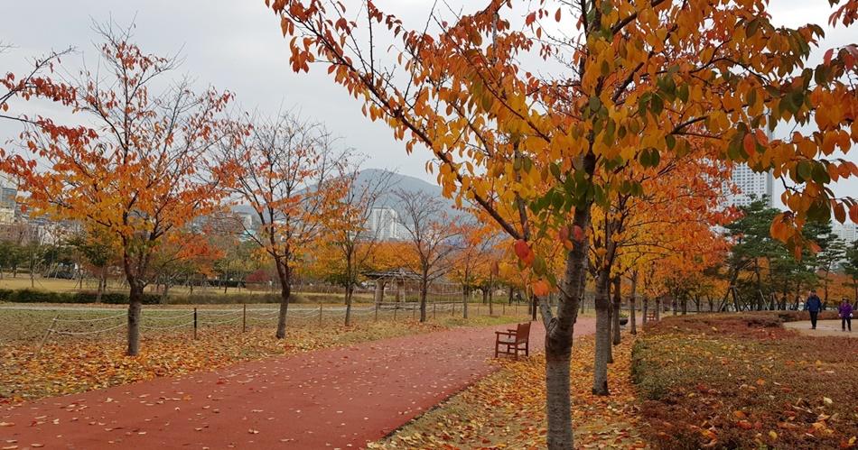 부산시민공원에는 5천 명 이상의 시민들이 헌수한 나무가 곳곳에 자리 잡고 있다